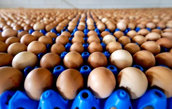 uova al fipronil